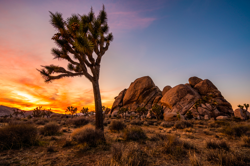 Know Before You Go: Joshua Tree National Park