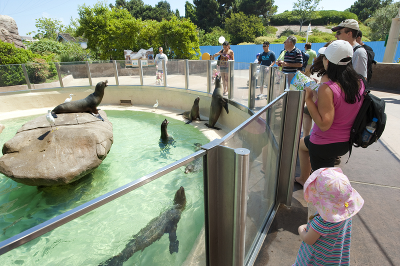 SeaWorld San Diego for Small Children