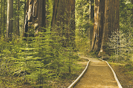 Calaveras Big Trees State Park activity guide
