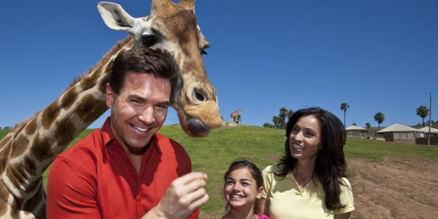 Amazing Animal Experiences in San Diego County
