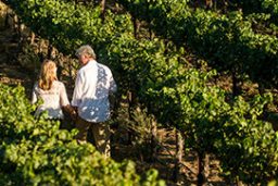 Visit Temecula Valley – wine country