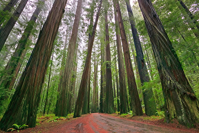 3 Ways to Explore California Redwoods