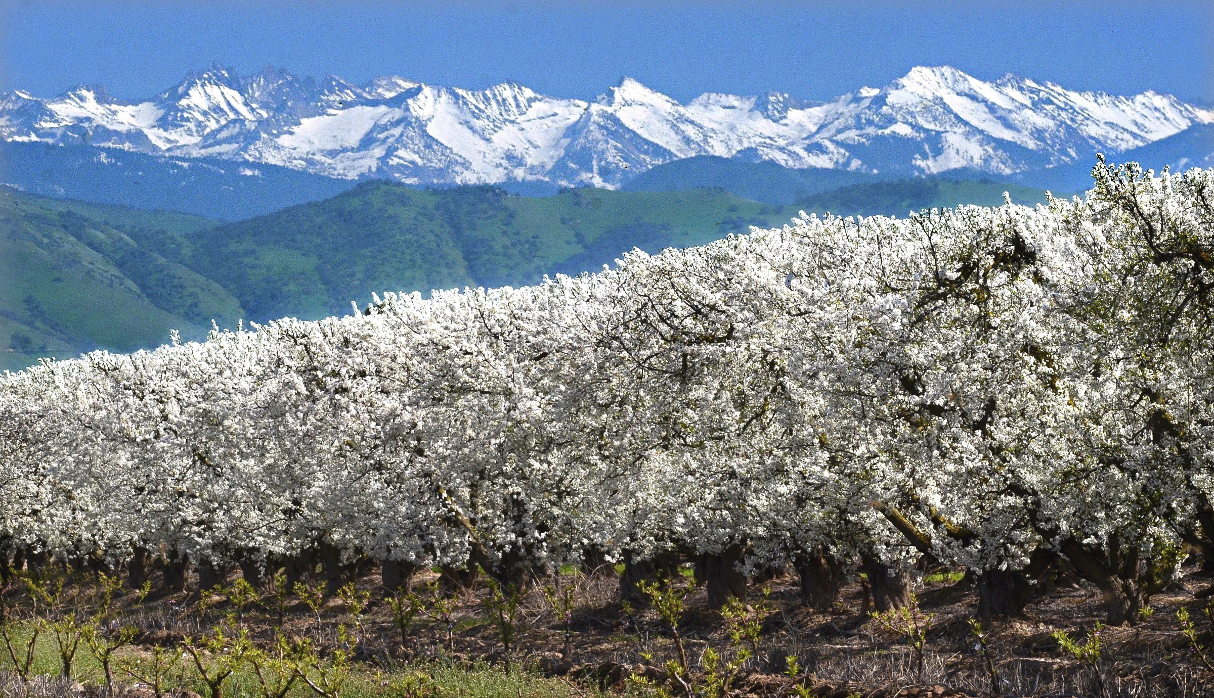 Fresno Blossom and Fruit Trails
