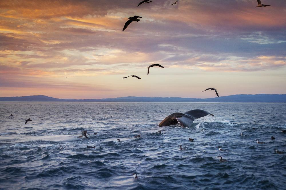 The Wonders of Whale Watching in California