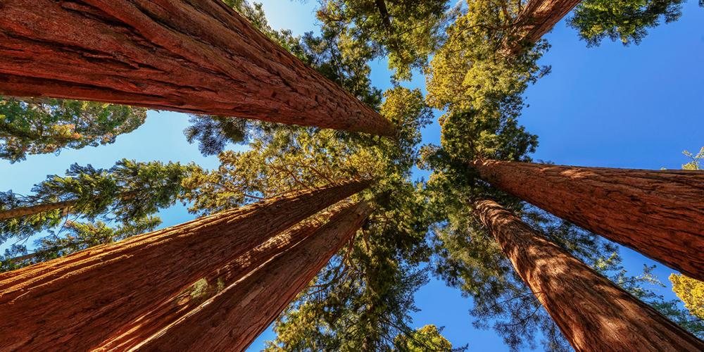 What You Need to Know About California's National Parks
