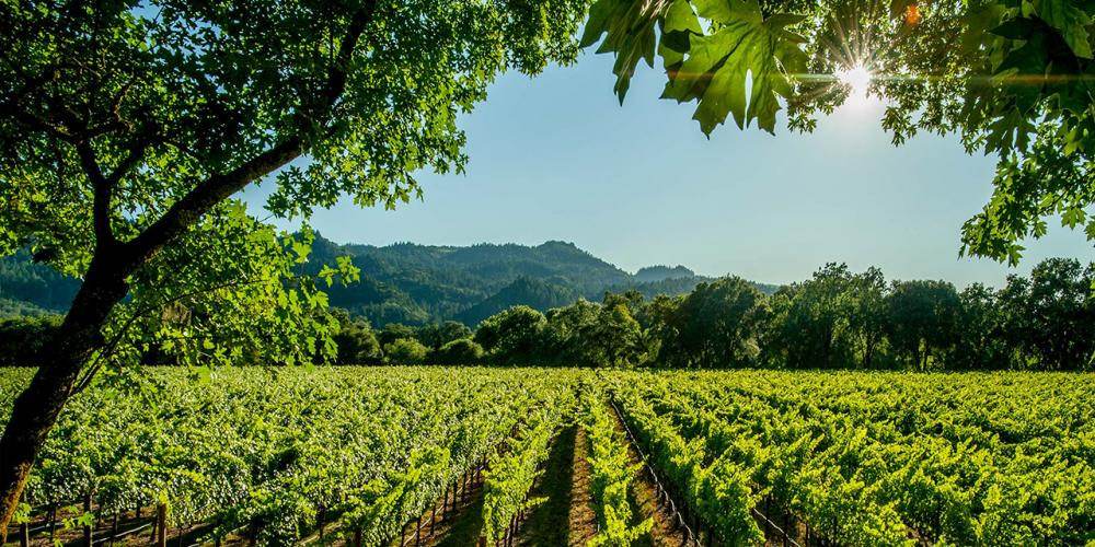What You Need to Know About Visiting California Wineries