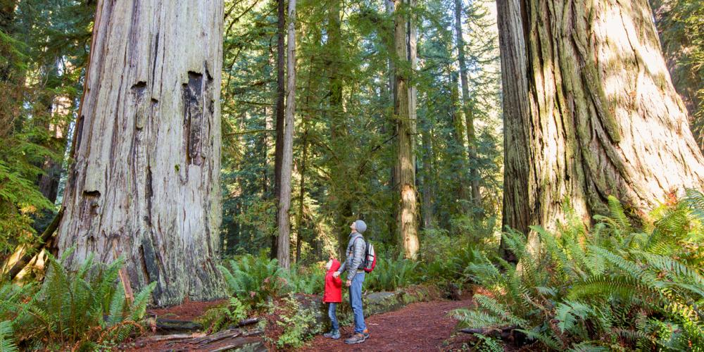 5 World-Class Natural Sites in California