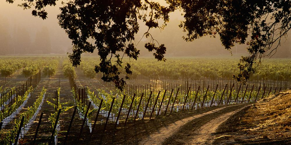Sonoma County Wines & Wineries