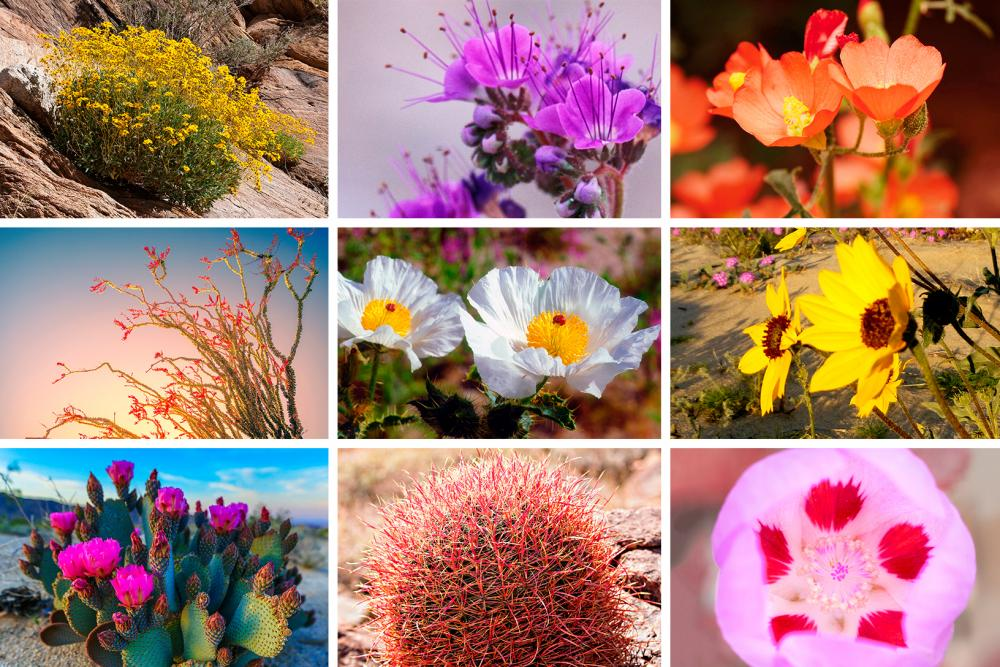 9 Spectacular Desert Flowers You Need to See