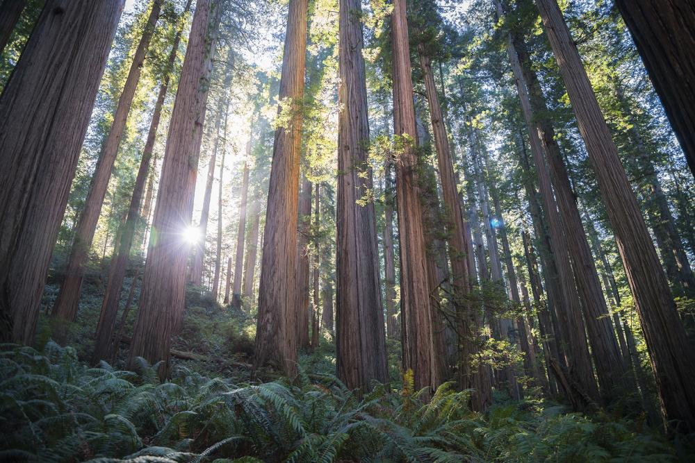 California Now Podcast on Redwood Coast, Best Hotels, and Sacramento Dining