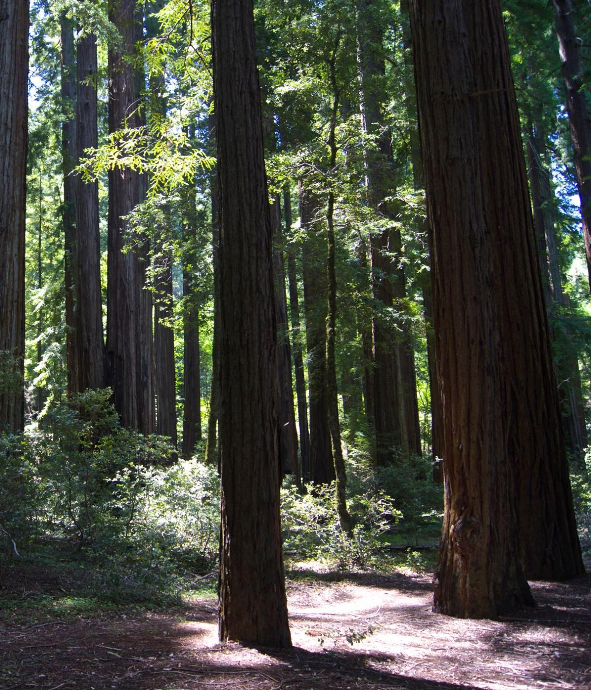 Smithe Redwoods State Natural Reserve
