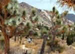 Joshua Tree day hikes