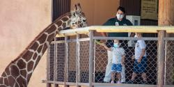 What You Need to Know About California Zoos and Aquariums