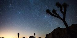 Guided Adventures at Joshua Tree