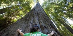 Places to See California's Big Trees