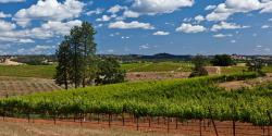 Sip Wine in Gold Country