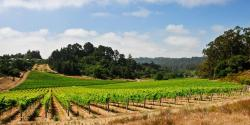Santa Cruz Wine Country