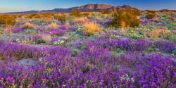 How to See California's 2019 Super Bloom