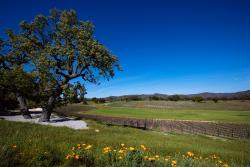 How to Plan a Perfect Wine Weekend in Paso Robles