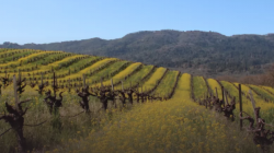 Experience Sonoma Valley