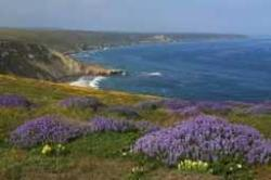 Channel Islands Wildflower Viewing
