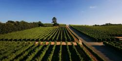 5 Amazing Things to do in Santa Maria Valley