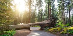 Things to do in Sequoia & Kings Canyon National Parks