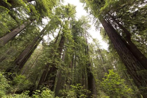 Know Before You Go: Redwood National & State Parks