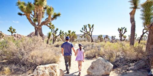 3 Amazing Ways to Explore Greater Palm Springs