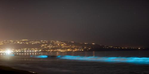 Here's How to Experience Bioluminescence in California