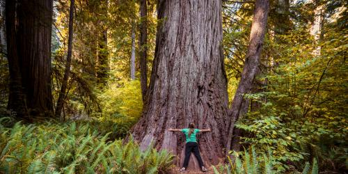 California Fourth Graders Now Get in Free at State Parks