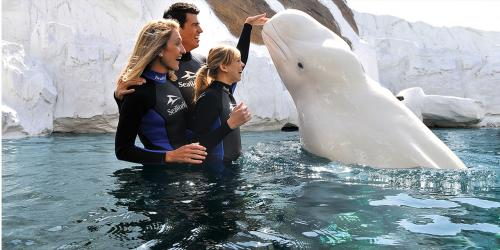 Special Animal Interactions at SeaWorld