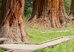 Sequoia & Kings Canyon – Day Hikes
